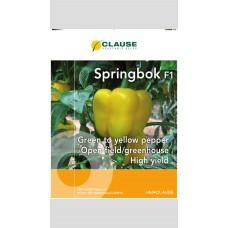 Capsicum - Springbok F1